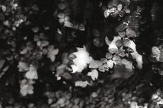 flower746-3