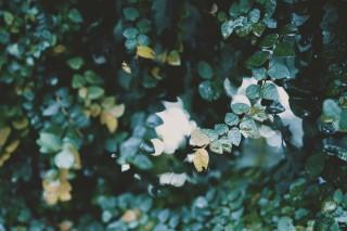 【高解像度】光と茂る葉(3パターン)