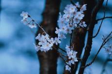 flower747-2