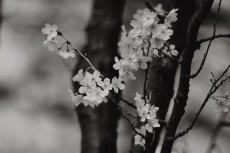 flower747-3