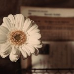 【高解像度】白いガーベラとアンティークな雑貨(3パターン)