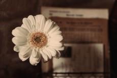 flower750