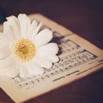 【高解像度】白いガーベラと楽譜(3パターン)