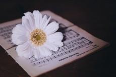 flower751-2