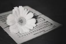 flower751-3