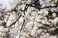 flower754