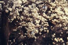 flower756-2