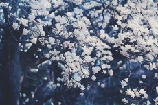 flower756