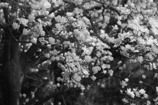 flower756-3
