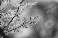 flower757-3