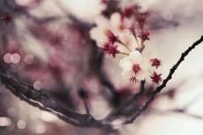 flower758-2