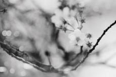 flower758-3