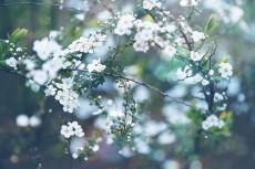 flower760