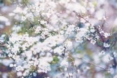 flower763-2