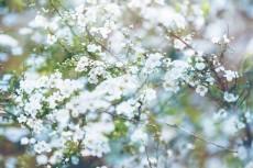 flower763