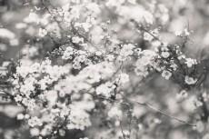 flower763-3
