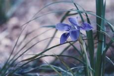 flower764-2