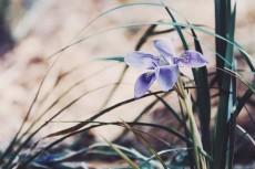 flower764