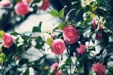 flower765-2