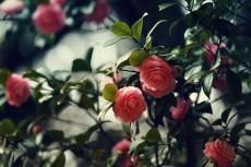 flower765