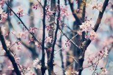 flower766-2