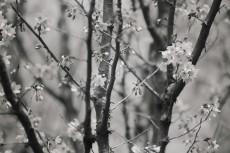 flower766-3