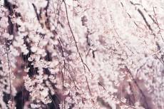 flower768-2