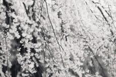 flower768-3