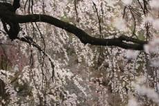 flower769-2
