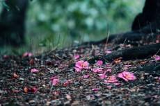 flower770-2