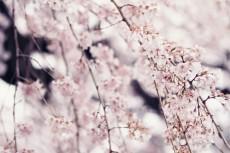 flower771-2