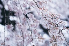 flower771