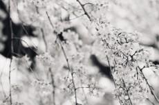 flower771-3