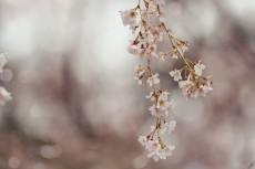 flower772-2