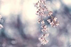 flower772
