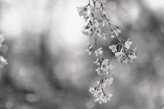 flower772-3