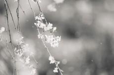 flower773-3