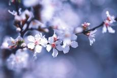 flower776-2