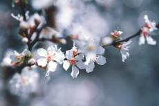 flower776