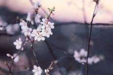 flower777-2