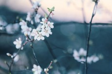 flower777