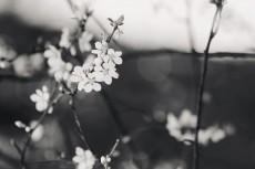 flower777-3