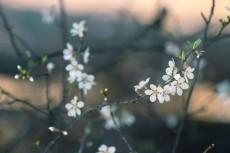 flower778-2