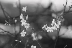 flower778-3