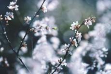 flower779
