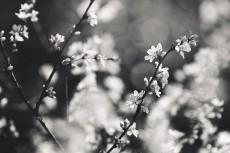 flower779-3