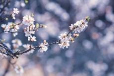 flower780-2