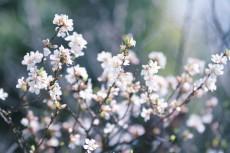 flower781-2