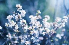 flower781