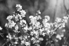 flower781-3